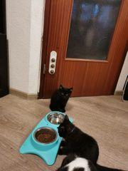 Katzen 3 Monate alt