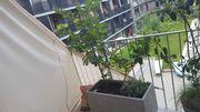 Neun Balkonpflanzen Büsche Bäume mit