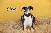 Darf die junge Silva bei