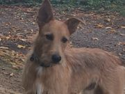 Suche Hundesitter Mo-Do Gassigehservice um