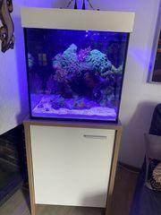 Schönes L Design Meerwasseraquarium Würfel