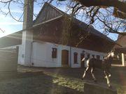 Boxen für Pferde- Ponys Selbstversorger