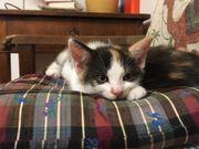 Süße Kätzchen suchen neue Familie