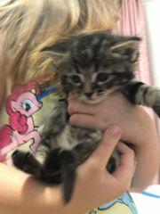 Mädchen Kitten