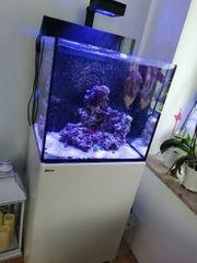 Red Sea Max E-170 Meerwasseraquarium