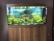 JUWEL Aquarien-Set Vision 260 LED