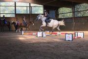 Leidenschaftliche Reiterin sucht Reitbeteiligung in
