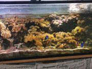 Meerwasser Aquarium ca 600l komplett