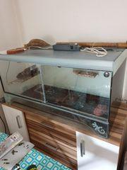 Terrarium Für Echsen oder Hamster