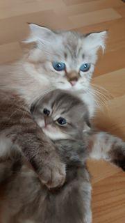 Süße Katzen Baby s