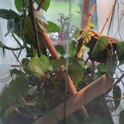 Exo Terra - 60x45x45 Terrarium Reptilien