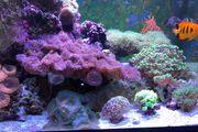 Suche Meerwasser Fische Aquarium Korallen