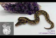 1 0 Leopard Mojave pos
