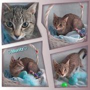 Baby Kater Kitten Moritz geimpft