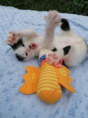 kitten Katzenbaby Katzenwelpen
