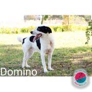 Domino - perfekter Reiterhof Hund