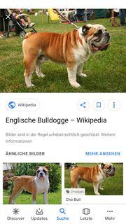 Gehe mit Ihrem Hund Gassi