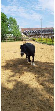 pflegebeteiligung für therapie pony gesucht