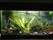 Aquarium komplett 100 Liter