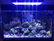 Aquarium Meerwasser Red Sea Reefer