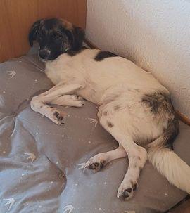 Chewy geb 01 2020 wartet: Kleinanzeigen aus Kaufering - Rubrik Hunde