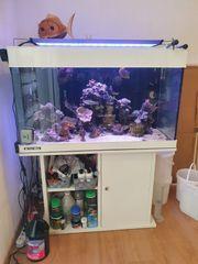 350 Meerwasser Aquarium ist sogar