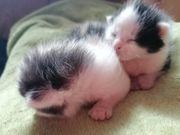 2kleine Katzendamen suchen ab Ende