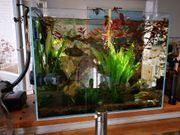 Aquarium komplett ADA-japanische Qualität 60x30X60
