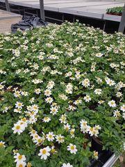 Suche Festanstellung im Grünen Bio-Bereich-Gartenbau