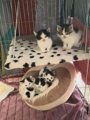 6 Katzenbabys suchen