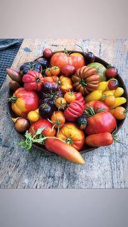 Tomatensamen aus der letzten Saison