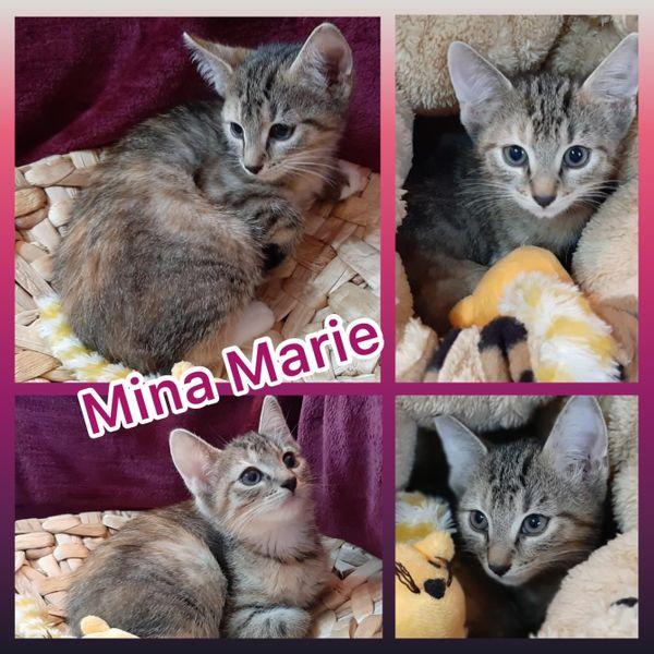 Kitten Baby Katze Mina Marie