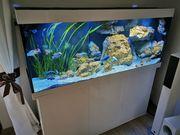 Juwel Rio 450 Liter Aquarium