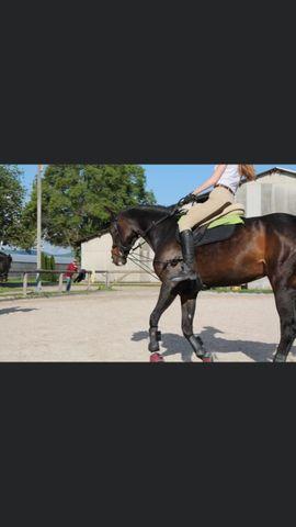 Suche Reitbeteiligung Reiter sucht Pferd: Kleinanzeigen aus Edingen-Neckarhausen - Rubrik Alles Mögliche