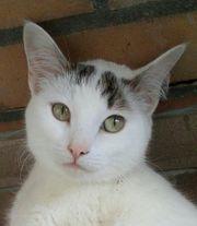 Allerliebste Katzendame sucht Herz auf