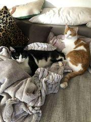 Zwei Katzen schweren Herzens abzugeben