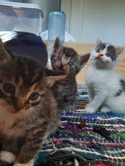 süße Katzenkitten