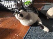 Susu verschmuste Katzendame ca 10
