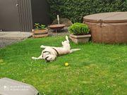 Hundebetreuung Gassi gehen Urlaubsbetreuung