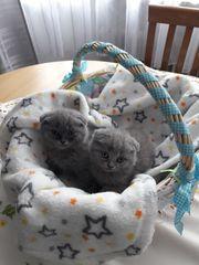 Kleine Kätzchen suchen Freunde