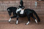 Ponys suchen Reiter in