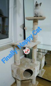 Katzenbaum mit integriertem Spielball Katzen