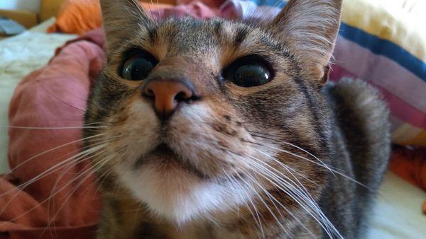 Tierbetreuung Housekeeping Katzenbetreuung Katzensitter Hundebetreuung