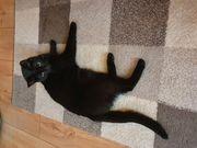 Junge Katze sucht Zuhause auf