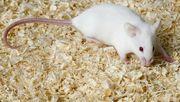 Fütter mäuse