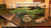 Großes Aquaterrarium Aquarium Terrarium