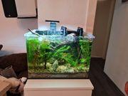 Blau Weisglas Aquarium 28 Liter