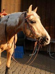 WESTERN Reitbeteiligung Pferd sucht Reiter
