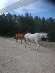 Pferdeboxen frei auf idyllischem Pferdehof