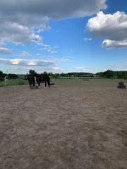 Suche Pony od Kleinpferd reitbaren